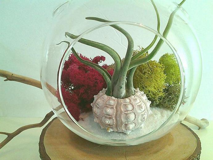 FUSCIA and LIME - A Large Round glass terrarium, sputnik sea urchin, Fuscia