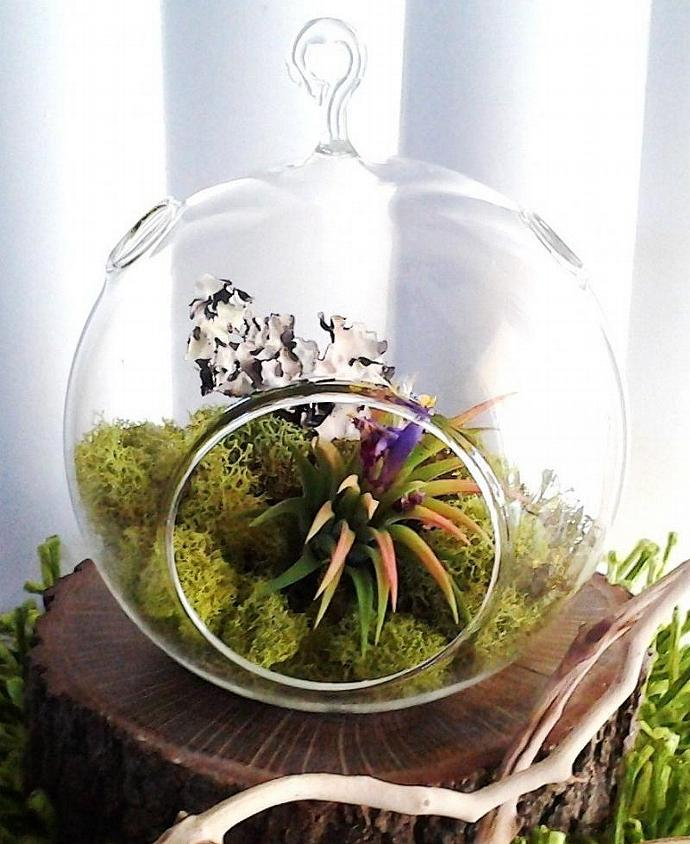 (FOREST) -  Round Glass Globe Terrarium with Lime Reindeer Moss, Natural Oak