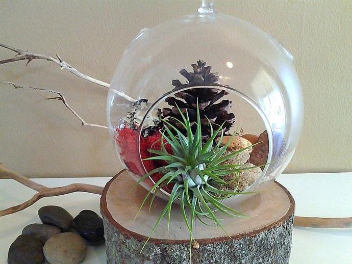 HARVEST - A Large Round glass terrarium, Hybrid air plant, Reindeer moss,