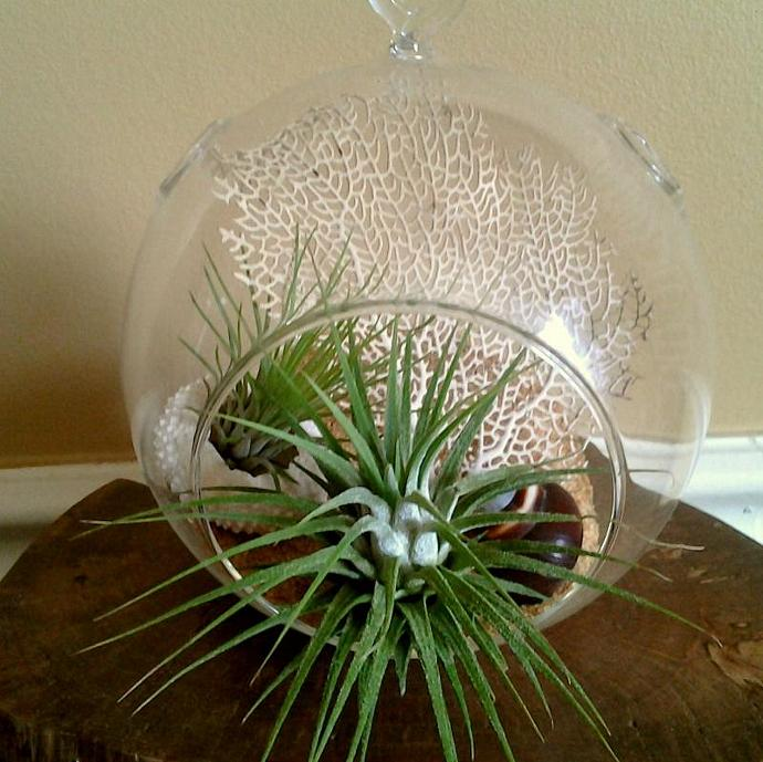 SEASCAPE - Round glass terrarium with a large beautiful real sea fan,  Air