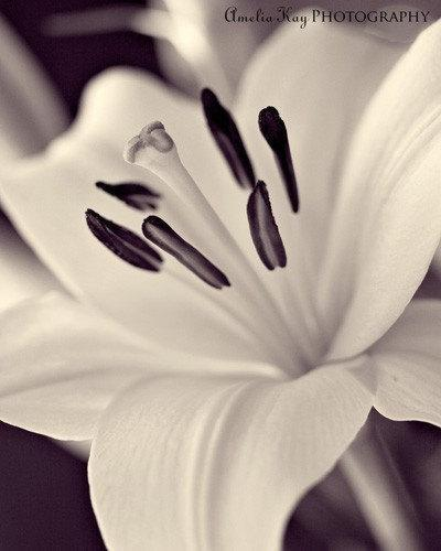 Looking Your Way -  Fine Art Flower Photograph Print - (8x10) Black and White
