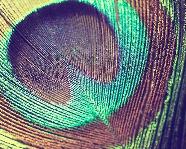 Peacock Feather Photograph - bird abstract simple blue green teal black brown -