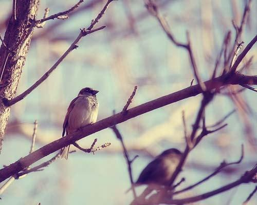 Bird Tree Branch Photograph Print - Feathered Friends - Faded Light Blue Fall