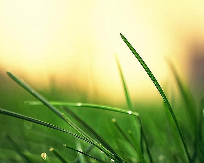 Nature Photography - Green Green Grass - 8x10 wall decor abstract plant bright