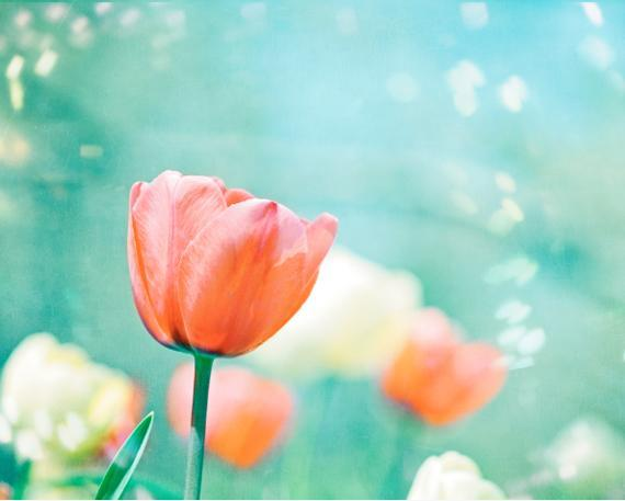 Flower Photography - 8x10 Tulip Print - Aqua Blue Peach Coral Teal Turquoise