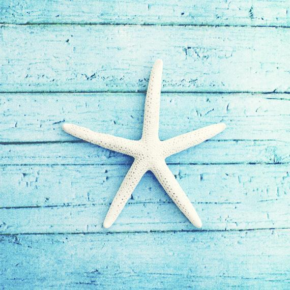 Starfish Photography - 8x8 Beach Print - Aqua Blue Wall Art Photo