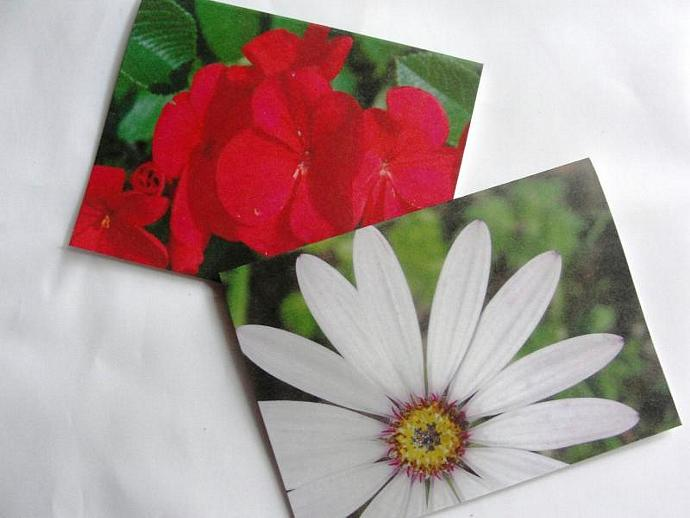 Floral Set of Magnetic Bookmarks
