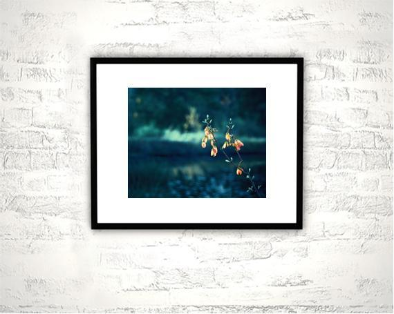 Nature Photography - 8x10 Dark Teal Print - Dark Blue Turquoise Peach Coral Navy