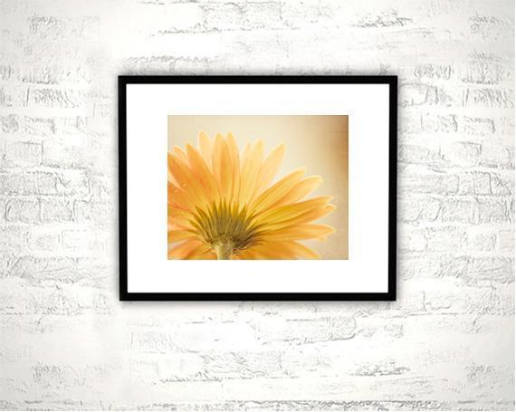 Yellow Flower Photography - 8x10 Daisy Print - Gold Golden Wall Art Photograph