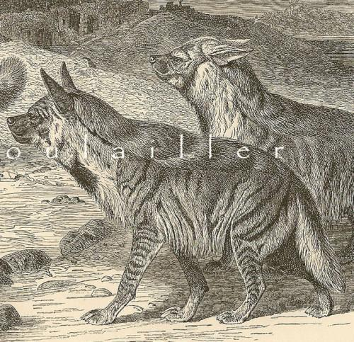 A Gathering of Hyaenas 1894 Victorian Royal Natural History Antique Engraving
