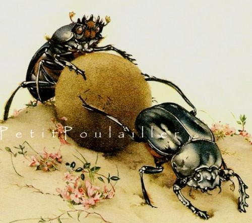 Scarab Beetle and Cicada 1983 Vintage Edward Detmold Fabres Book of Insects