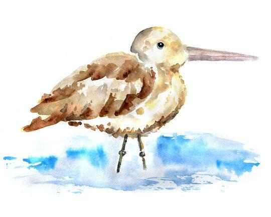 beach bird print, beach decor, watercolor bird print,  beach house decor,