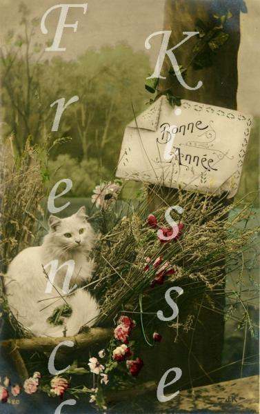 DIGITAL Scan jpeg photo WHITE CAT antique French postcard montage collage