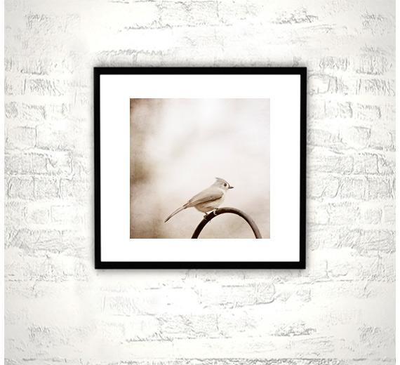 8x8 Bird Photography - Tufted Titmouse Print - Neutral Beige Photograph