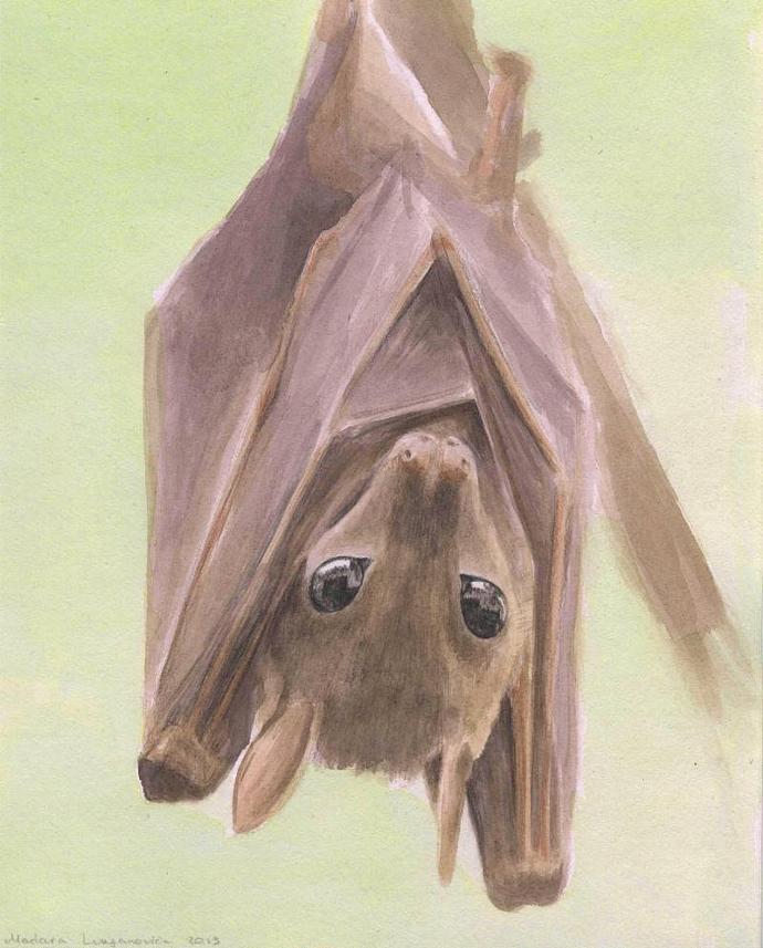 Fruit Bat. Original Watercolor Painting. 8x10 Realistic painting.