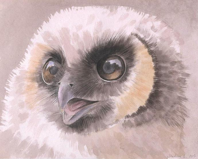 Owl. Original Watercolor Painting. Baby Owl. 8x10 Realistic watercolor painting.