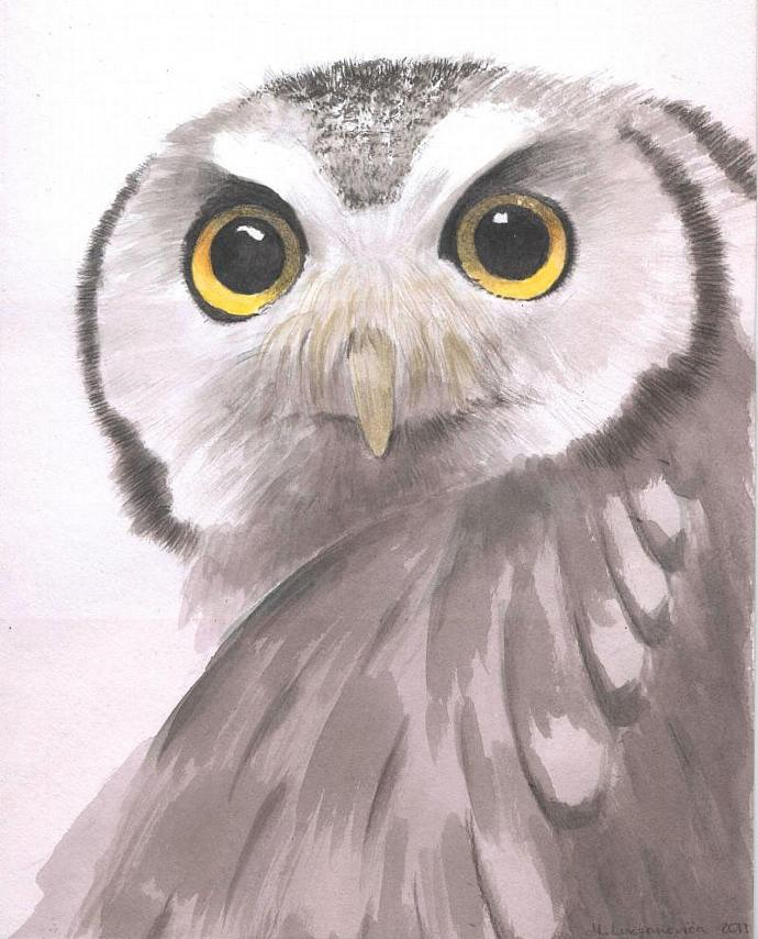 Owl. Original Watercolor Painting. White owl. Realistic painting. 8x10