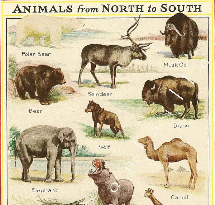 Animals From North to South 1935 Antique Kate Abelmann Natural History