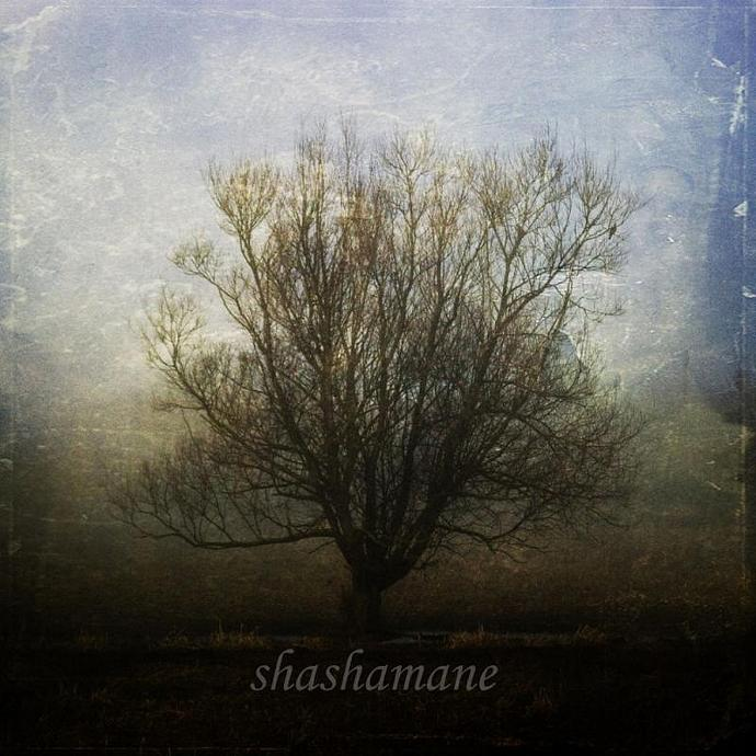 "Dreams can grow in strange places - Misty tree scene 5 x 5"" fine art photography"