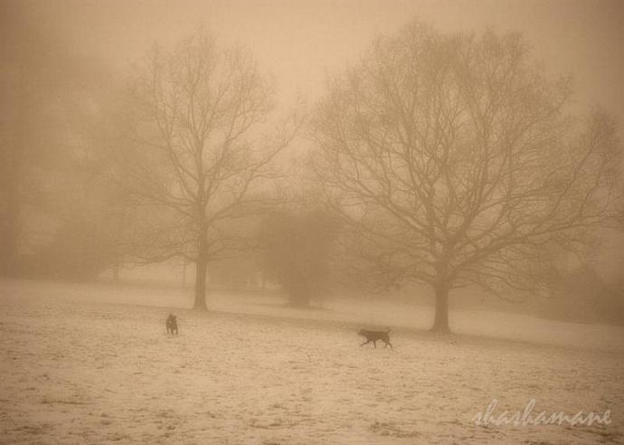 "Chiens et brouillard - Dogs and fog 5 x 7"" fine art photography print"