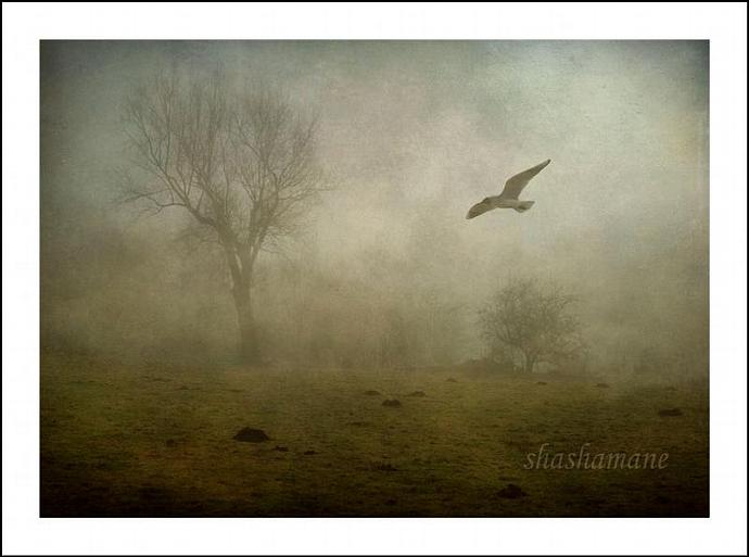 "Victims of circumstance - Haunting and moody bird in misty flight 5 x 7"" fine"