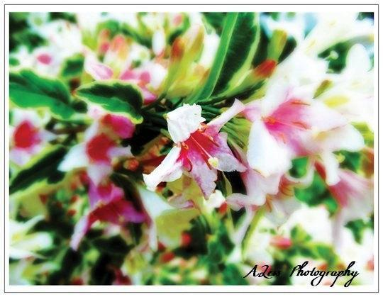 Photography Note Cards Set Of 10- Blank, Floral, Personalize