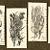 Botanical Monograms 1882 Victorian F Edward Hulme 7-Piece Packet Antique