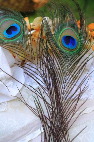 "10-12"" Natural Peacock Feathers - Set of 2 (GA149)"