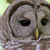 Barred Owl Close up Focus on Eyes Nature Photography All Occasion Greeting Card