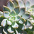 Cactus photography, Southwestern Decor, Mint Green Wall Art