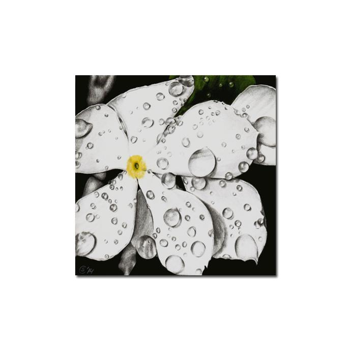 PERIWINKLE flower Sadar Bahar colored pencils painting Sandrine Curtiss ORIGINAL