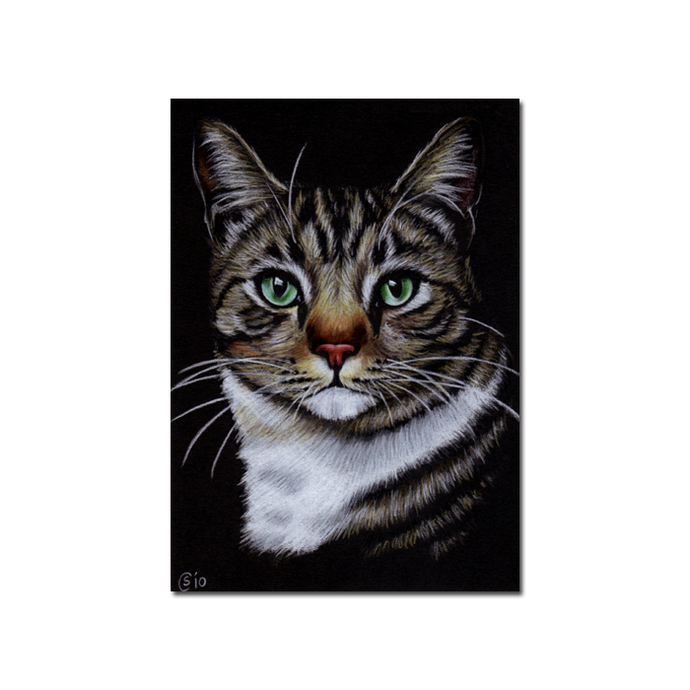 Tabby 67 CAT grey ginger orange tiger kitty kitten drawing painting Sandrine