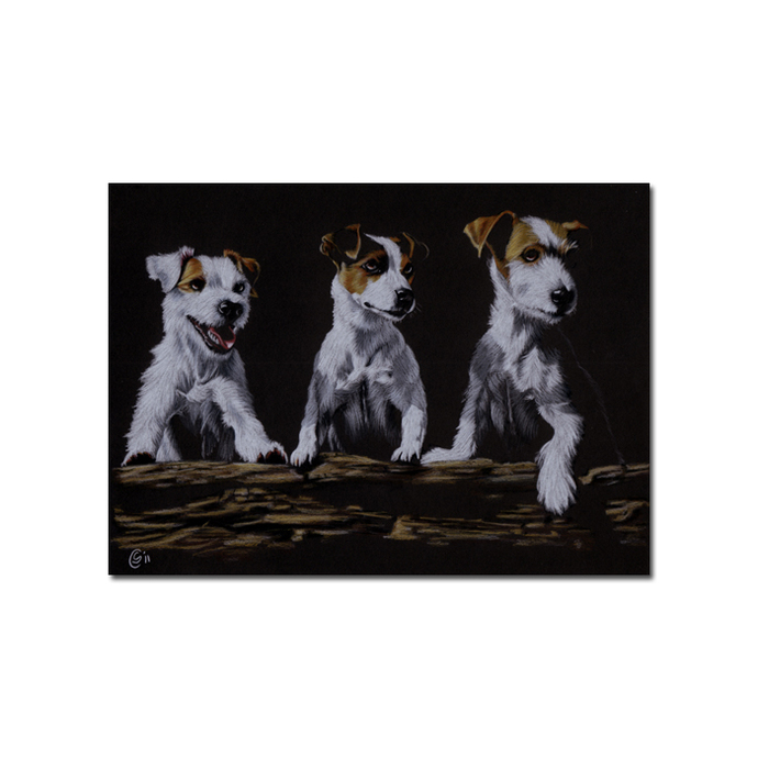 JACK RUSSELL dog puppy pet pencil painting Sandrine Curtiss Art Print 5x7""