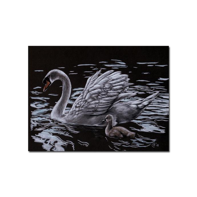 "SWAN 4 bird duck chick drawing painting Sandrine Curtiss Art PRINT 5x7"""