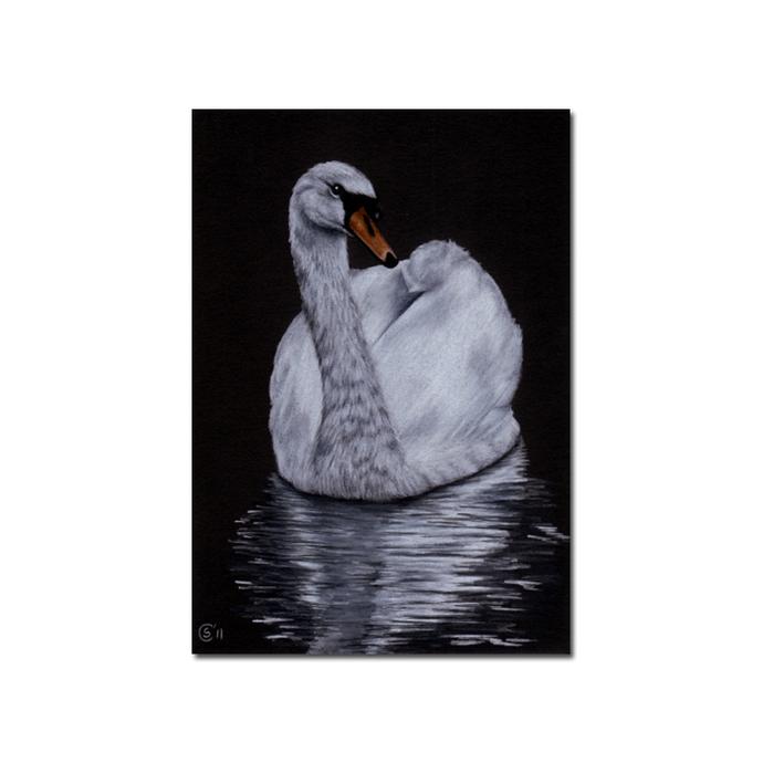 "SWAN 2 bird duck chick drawing painting Sandrine Curtiss Art PRINT 5x7"""