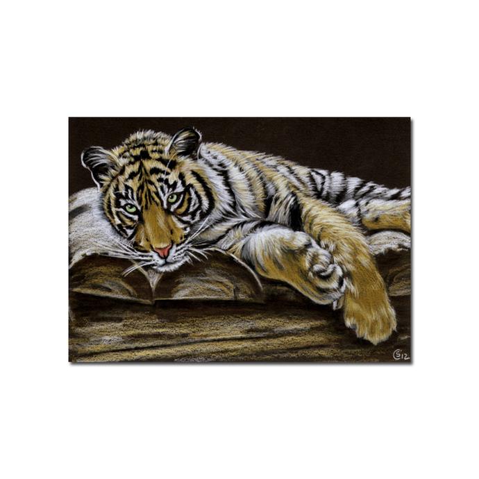Tiger 42 big cat animal feline kitty kitten drawing painting Sandrine Curtiss