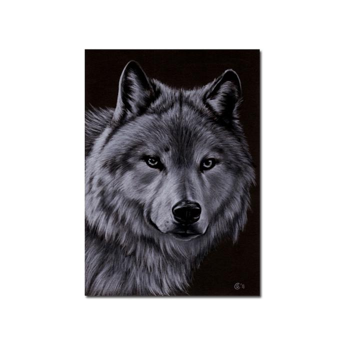 "WOLF 3 dog puppy canine loup pencil painting Sandrine Curtiss Art Print 5x7"""