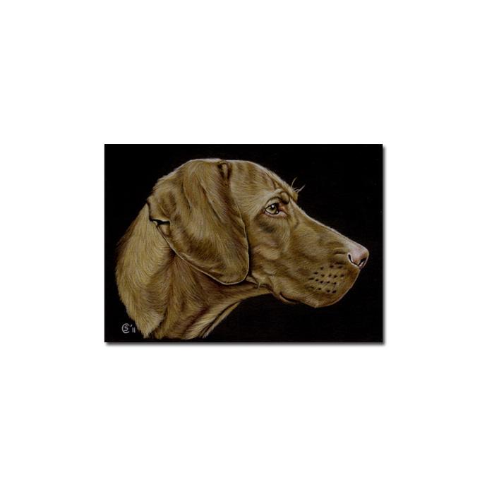 VIZSLA dog puppy pet pencil painting Sandrine Curtiss Art Limited Edition Print