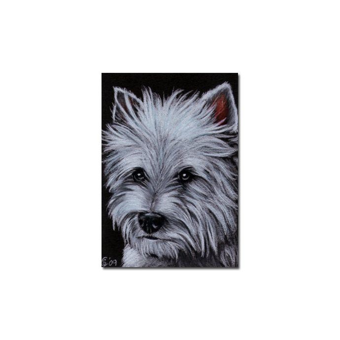 TERRIER 2 Yorkshire dog puppy pet pencil painting Sandrine Curtiss Art Limited