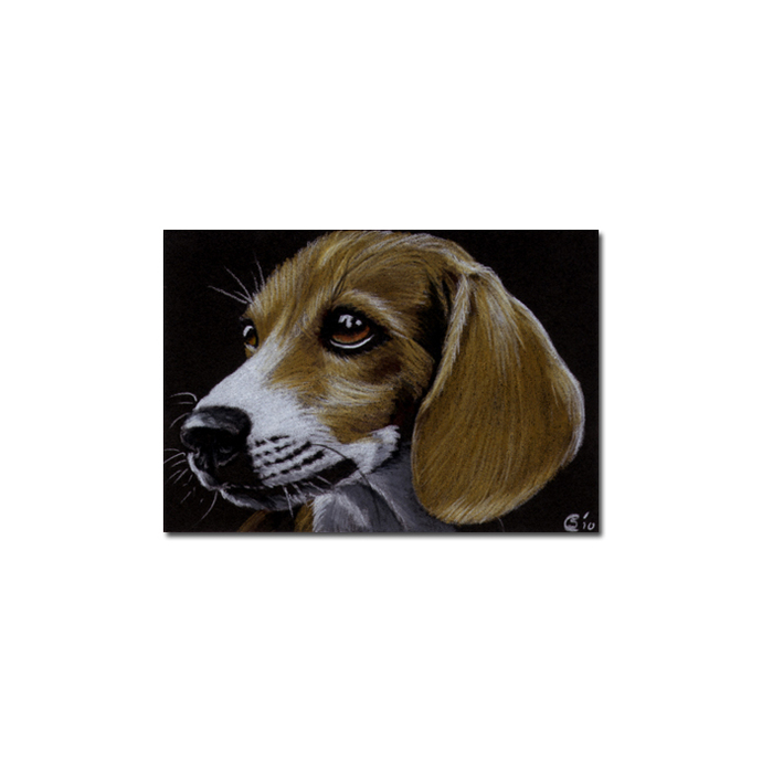 BEAGLE dog puppy pet pencil painting Sandrine Curtiss Art Limited Edition Print
