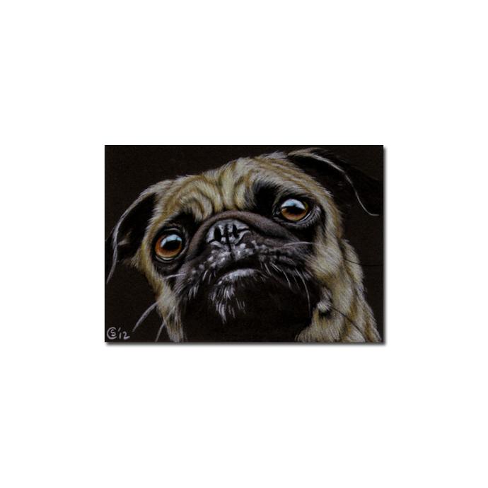 PUG 8 dog puppy pet pencil painting Sandrine Curtiss Art Limited Edition PRINT