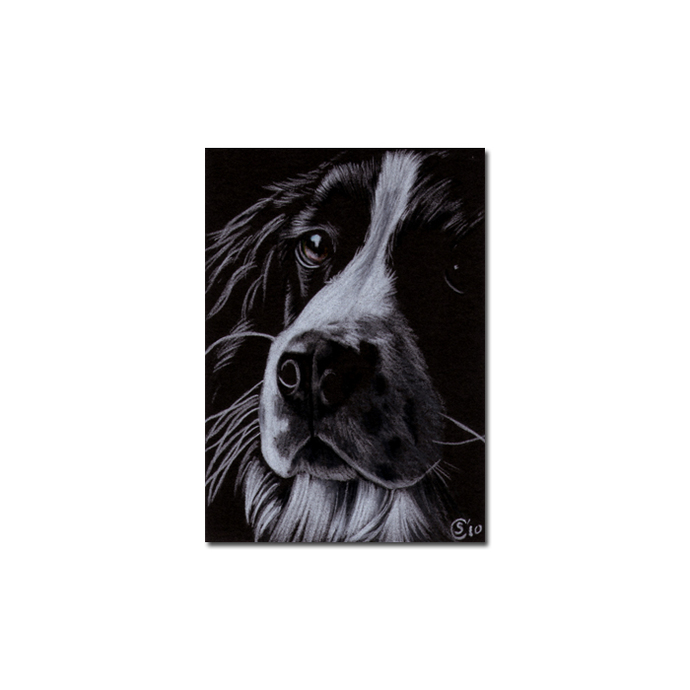 COLLIE 3 dog puppy pet pencil painting Sandrine Curtiss Art Limited Edition