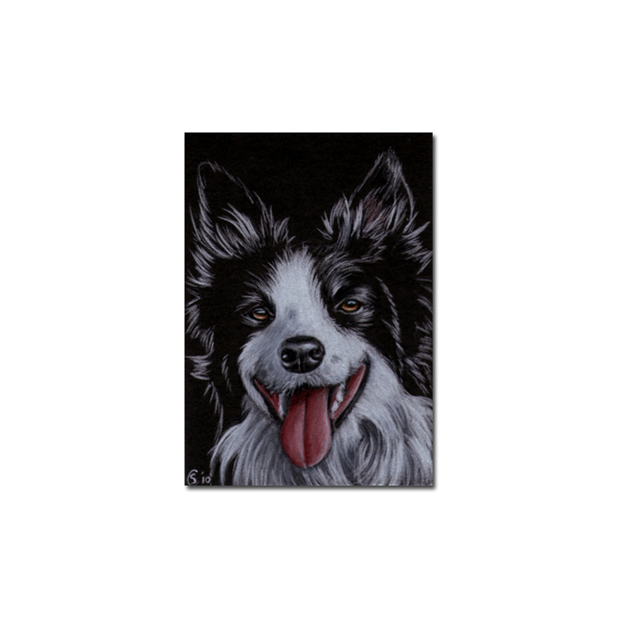 COLLIE 5 dog puppy pet pencil painting Sandrine Curtiss Art Limited Edition
