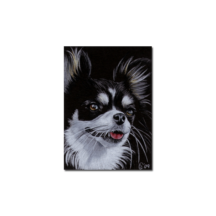 CHIHUAHUA 8 Yorkshire dog puppy pet pencil painting Sandrine Curtiss Art Limited