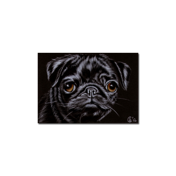 PUG 7 dog puppy pet pencil painting Sandrine Curtiss Art Limited Edition PRINT