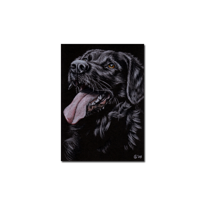 BLACK LABRADOR 20  lab dog puppy pet pencil painting Sandrine Curtiss Art