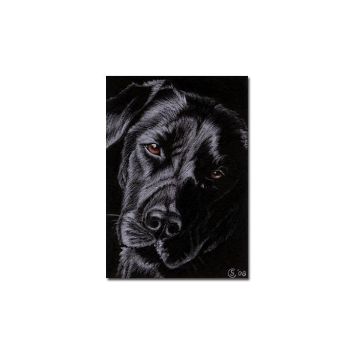 BLACK LABRADOR 15 lab dog puppy pet pencil painting Sandrine Curtiss Art Limited