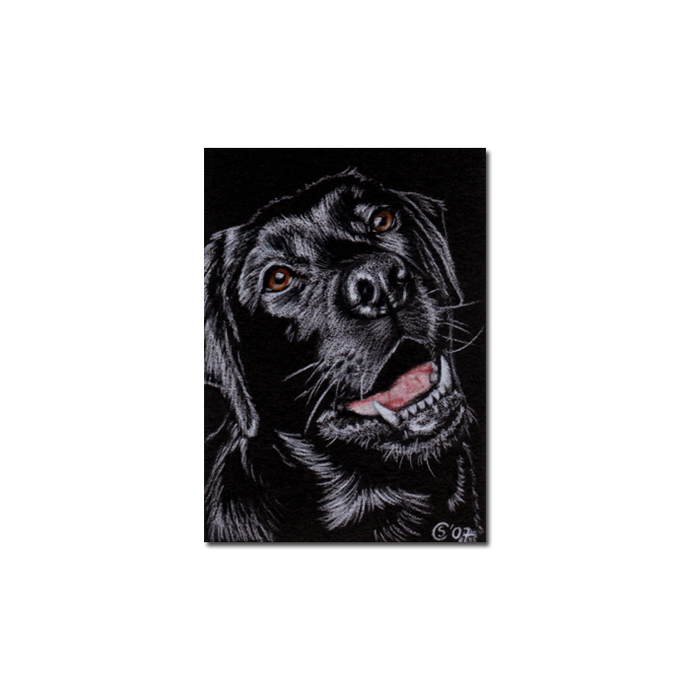 BLACK LABRADOR 13 lab dog puppy pet pencil painting Sandrine Curtiss Art Limited