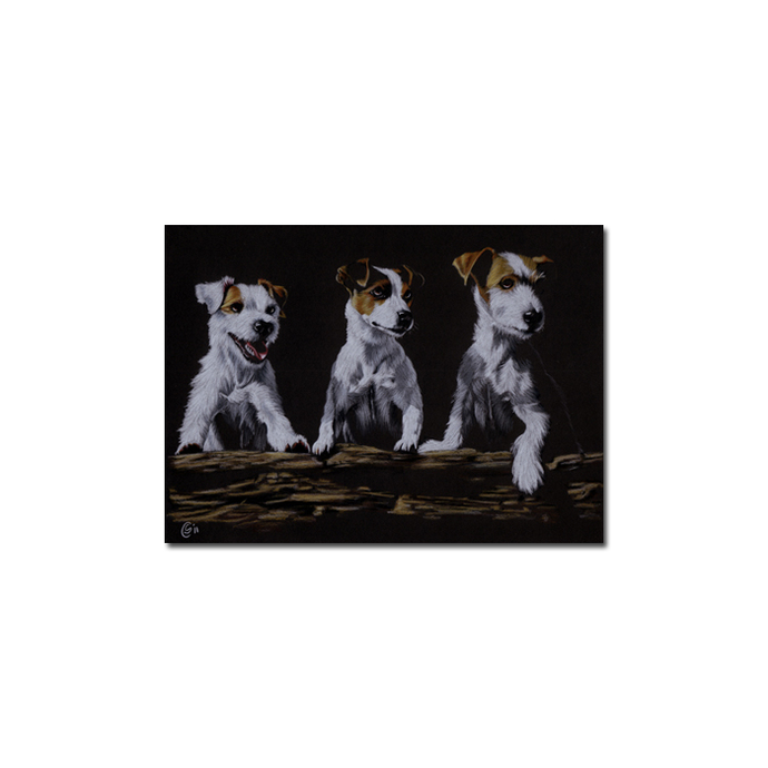 JACK RUSSELL dog puppy pet pencil painting Sandrine Curtiss Art Limited Edition