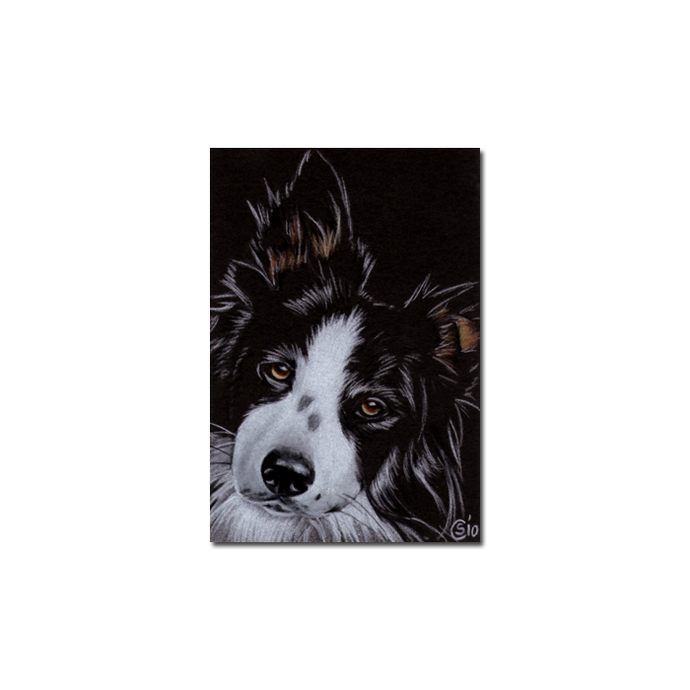 COLLIE 4 dog puppy pet pencil painting Sandrine Curtiss Art Limited Edition